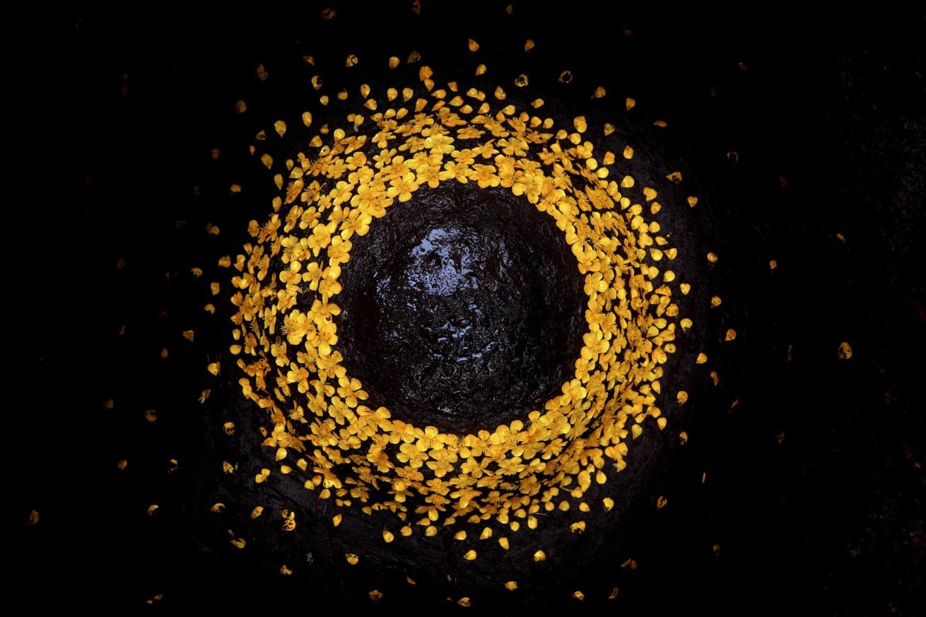 Blütenhalbkugel / Blossomhemisphere